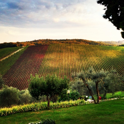 Querceto Vineyard - view from our villa