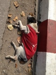 Even street dogs have cool threads