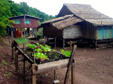 """Typical bungalow old and new. We only saw these raised gardens in the """"big city"""" of Kia village - commonly they would be in ground large communal gardens."""