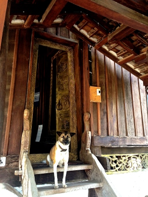 Temple dog.