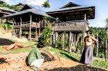Myanmar motorbike trip tea harvesting